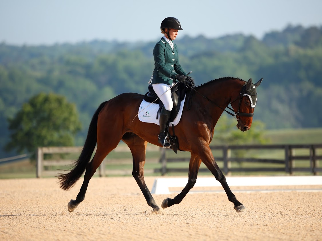 featured-sale-horse