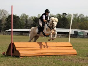 Daddy Said Yes – Friday – 2005 Pinto – 14hh Gelding
